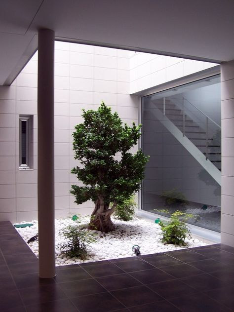 Jardines Interiores De Casas