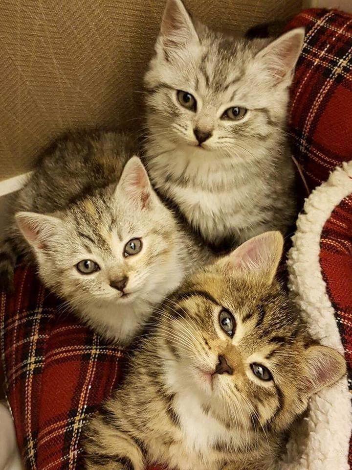 Raising Newborn Kittens Tips For Surrogate Cat Mothers Newborn Kittens Raising Kittens Cat Care