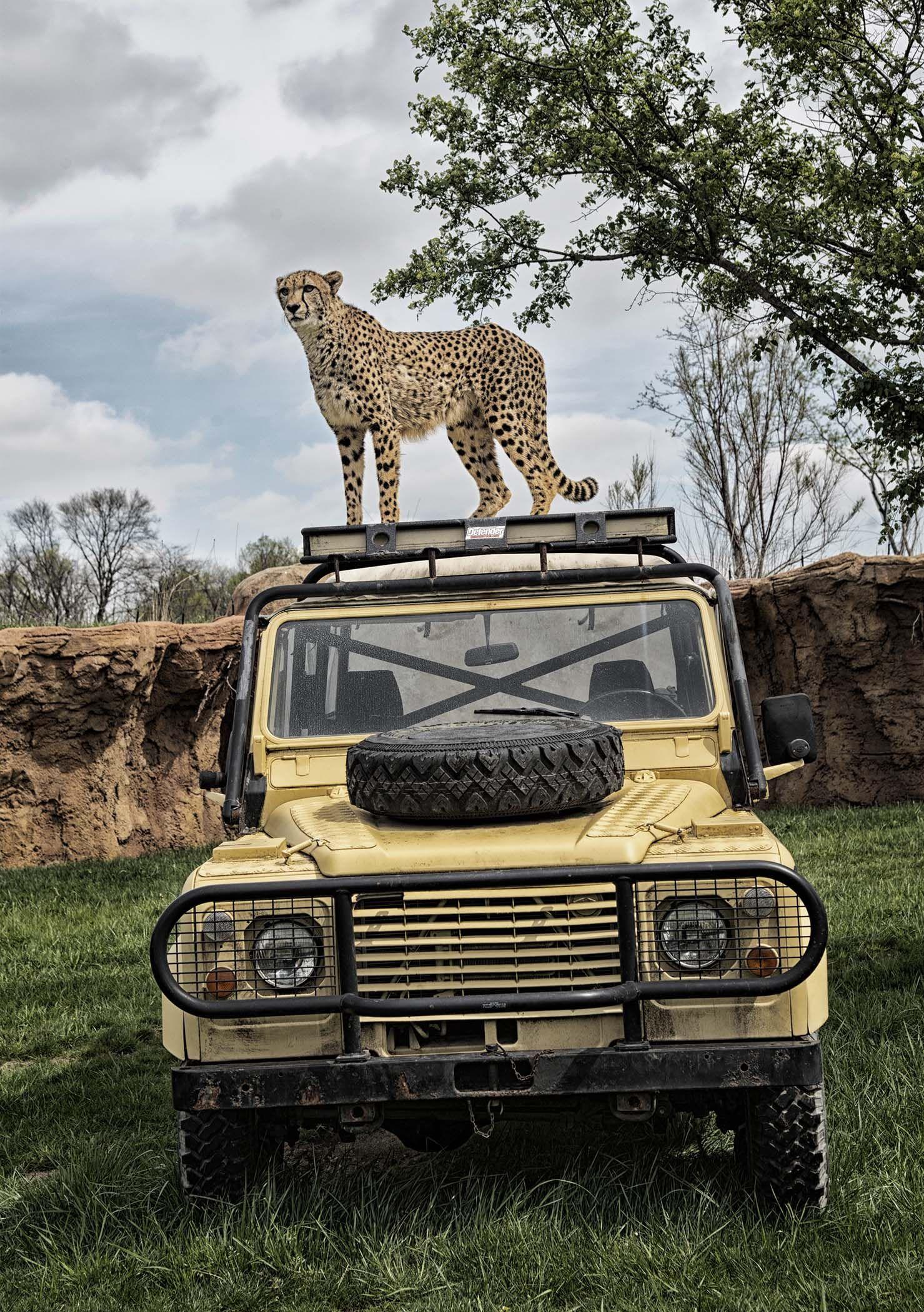 Photos A Stunning Peek Inside Columbus Zoo S Heart Of Africa