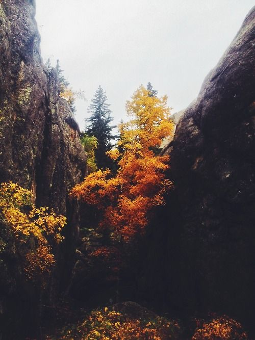"""// More Mtn Men Diaries, Favorite Places, Autumn, Existentialism Mitakuy, Elk Speaking, Black Each, Beautiful Places, Fall Wildtravel, Fall Color -topographical- existentialism •MITAKUYE OYASIN• autumn vibes falling #WildTraveller mtn-man-diaries: """" Black Elk Speaks. """" Fall Color"""