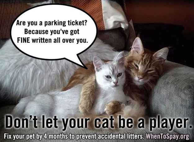 Don T Let Your Pet Be A Player Funny Cat Jokes Bad Cats Kittens Funny