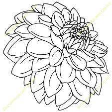 Dahlia Drawing Flower Line Drawings Flower Drawing Flower Tattoo Drawings