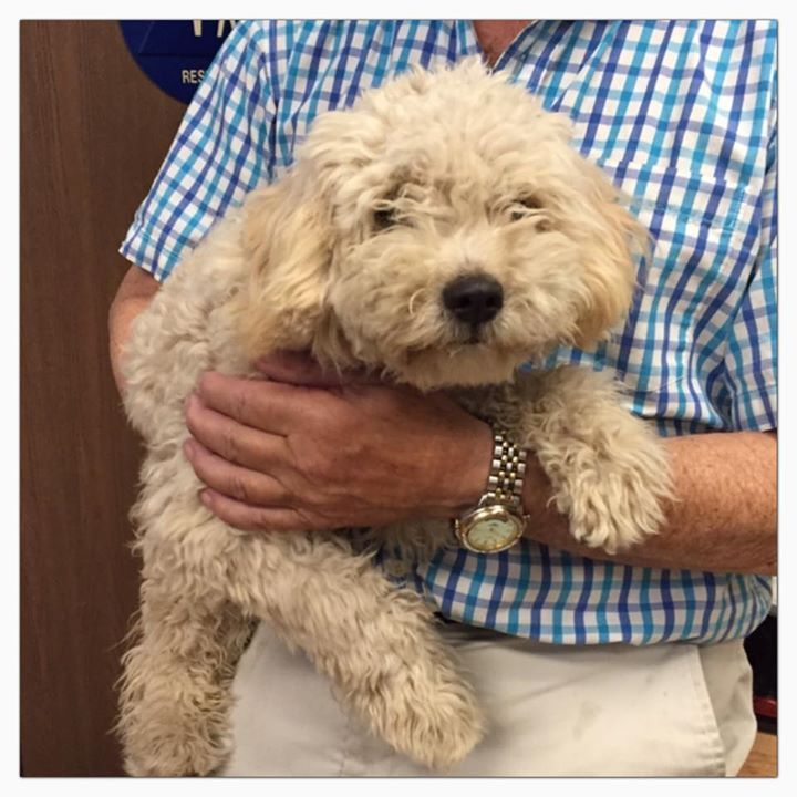 Bunny is a sweetie , 1-2 years old female Cockapoo? Very sweet, friendly. Needs out March 4 ID #A479379 Please call 909-384-1304 San Bernardino City Shelter ,CA