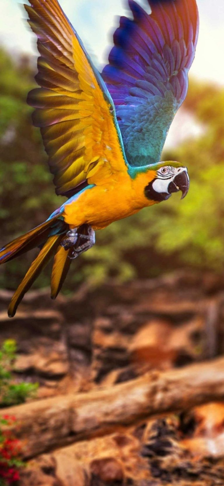 Beautiful Wallpapers For Apple Iphone X Iphone Wallpaper Iphone Wallpaper Tumblr Iphone Wallpaper Quotes Iphon Beautiful Wallpapers Parrot Beautiful Birds