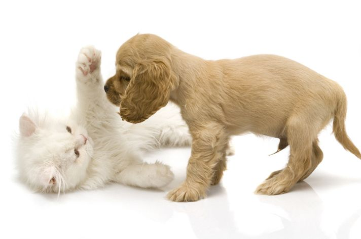 Cute Puppies And Kittens Playing Photos