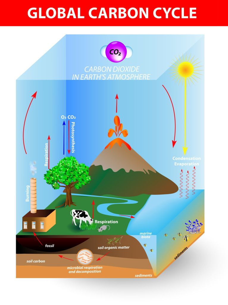 Global Carbon Cycle Kidspressmagazine Com Carbon Cycle Cycle Carbon
