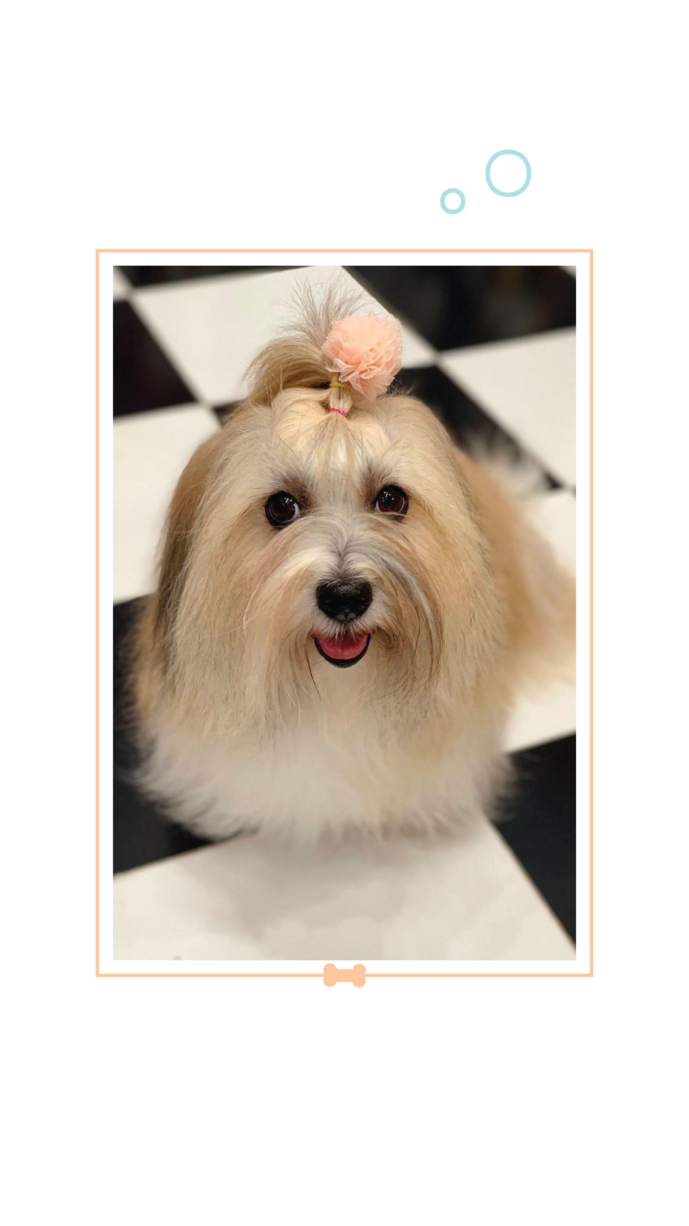 Spa For Dogs Headsupfortails Buy Pets Online Pet Supplies Pet Supplies