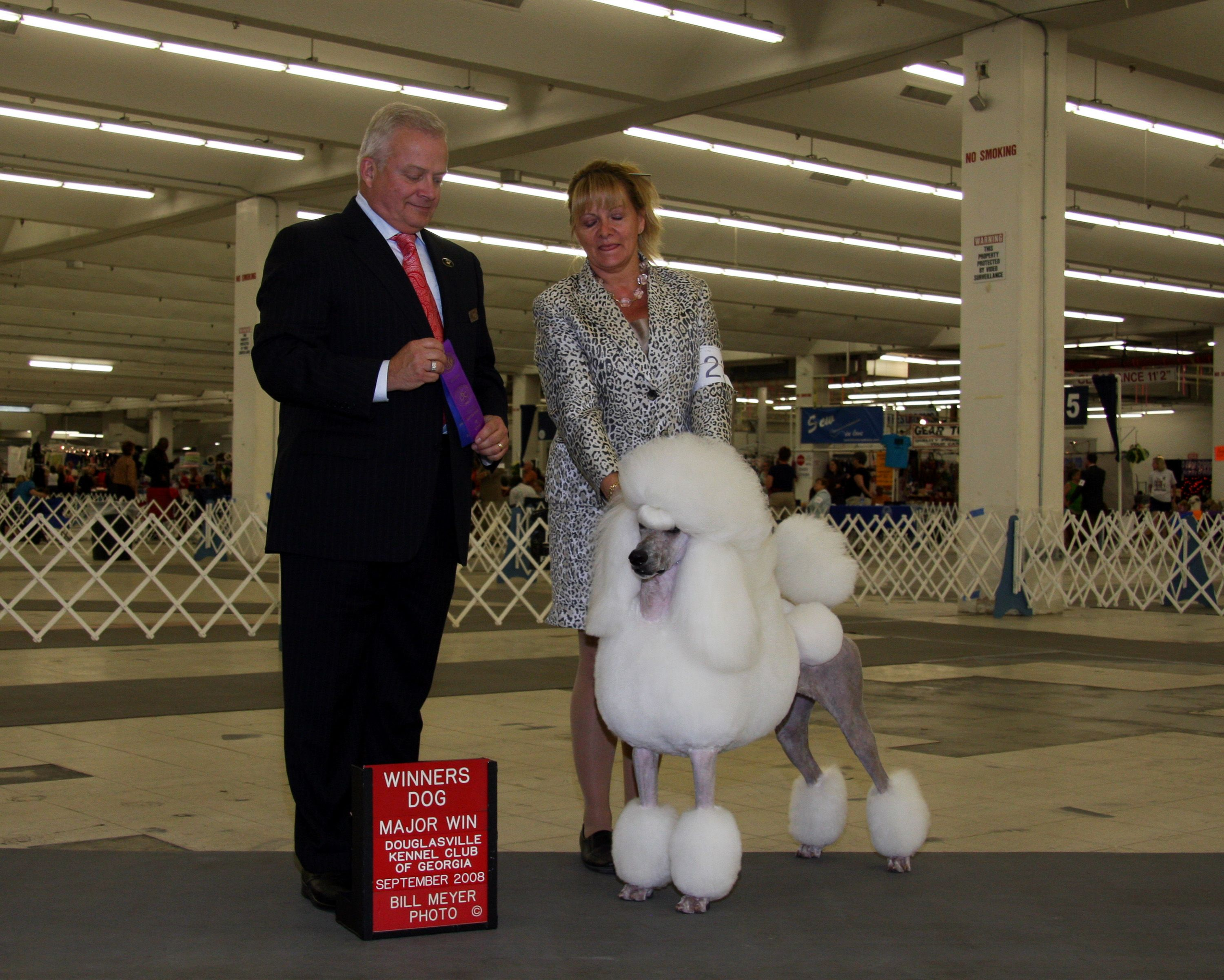 Ch Adagio What Happens Here Stays Here Aka Vegas Poodle Puppies