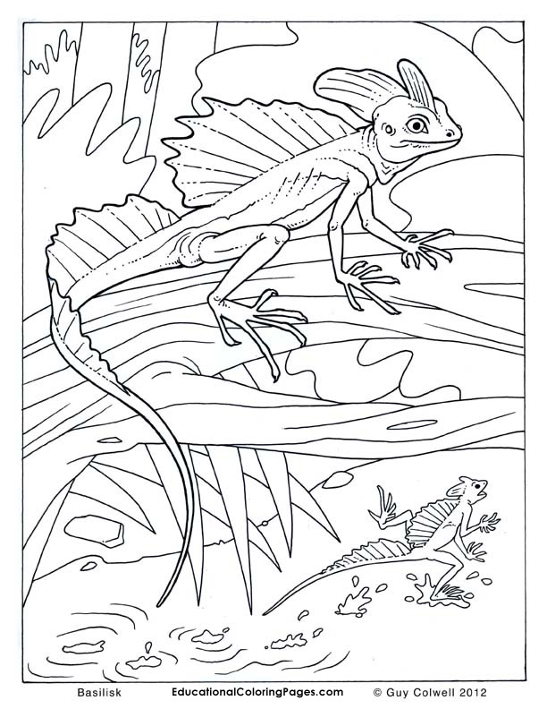 Basilisk Cow Coloring Pages Animal Coloring Pages Farm Animal Coloring Pages