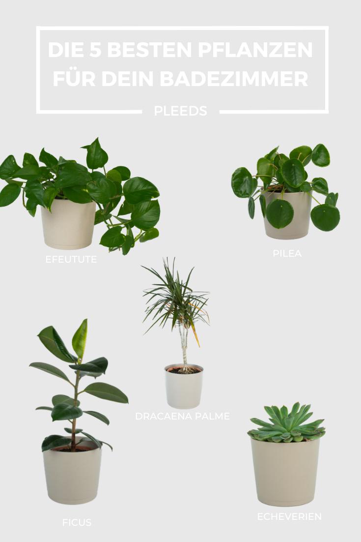 Die Top 5 Badezimmerpflanzen Sie Werten Dein Badezimmer Optisch Auf Da Ist Fur Jeden Das Richtige Dabei Pleeds Badezimmerpflanzen Pflanzen Zimmerpflanzen