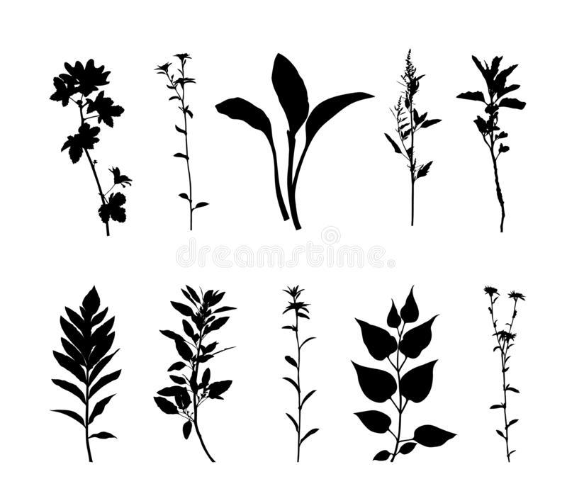 Plants Silhouette Set Isolated On White Background Vector Stock Vector Illustration Of Design Floral Silhouette Illustration White Background Silhouette Art