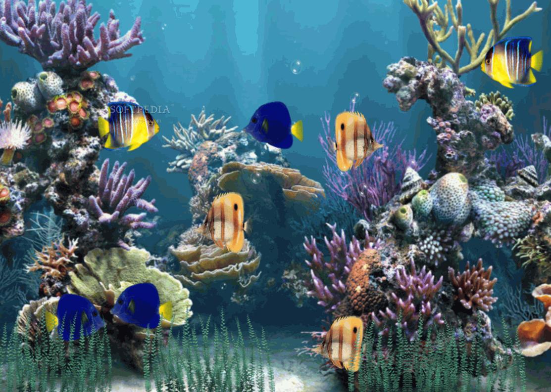 animated aquarium desktop wallpaper wallpapersafari epic car