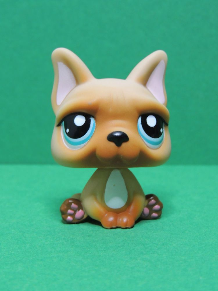1847 chien dog french bulldog brown blue eyes lps - Chien pet shop ...