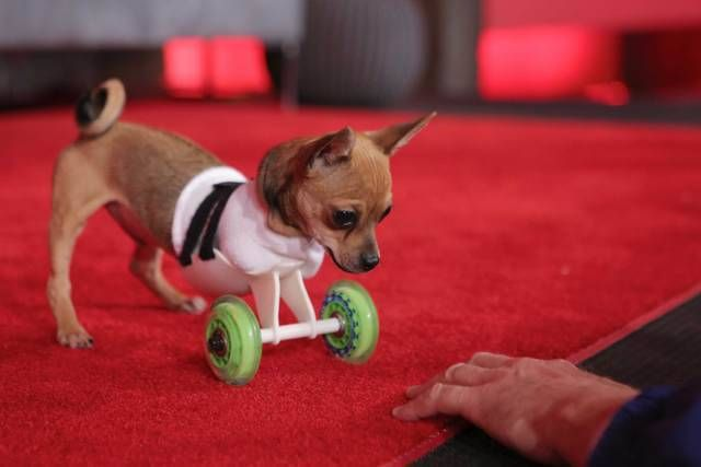 Pin by Pam O'Hara on Animal Health Disabled dog, Pets