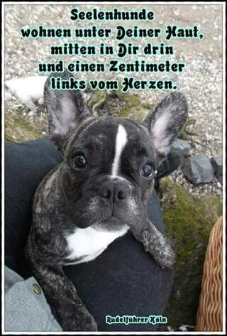 seelenhunde hund hunde bully bulldog ein leben ohne hund ist sinnlos hunde hunde. Black Bedroom Furniture Sets. Home Design Ideas