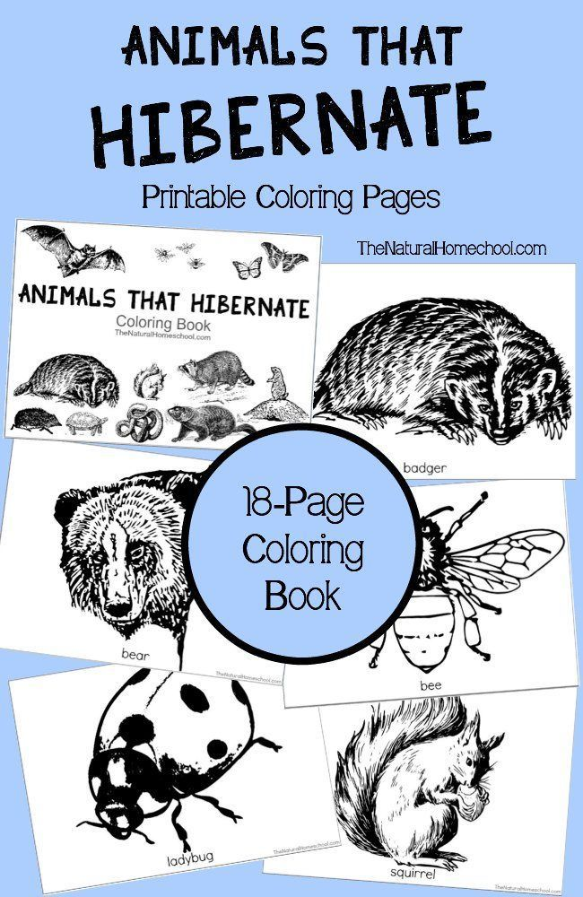 Animals That Hibernate In Winter Printable Coloring Book The Natural Homeschool Animals That Hibernate Printable Coloring Book Coloring Pictures Of Animals