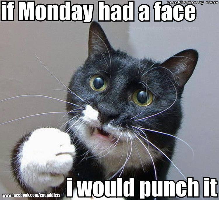 Image result for tuxedo cat happy monday