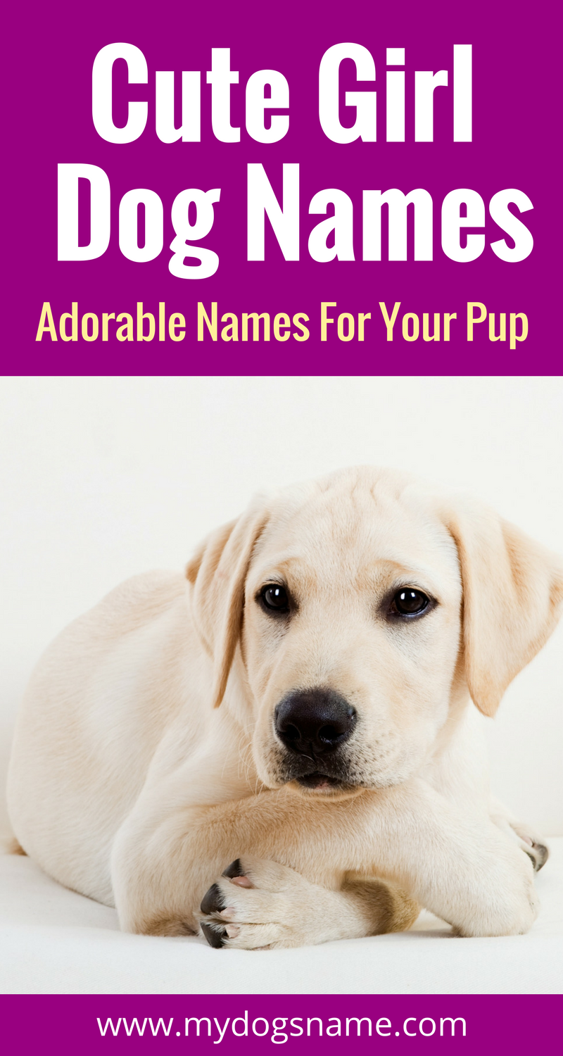 Absolutely Adorable Names For Your New Female Furbaby These Cute Dog Are Doggone