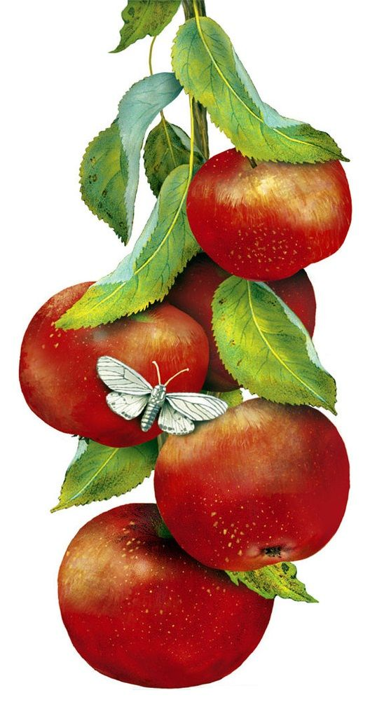 Red Riple Apples (Mary Lake Thompson)