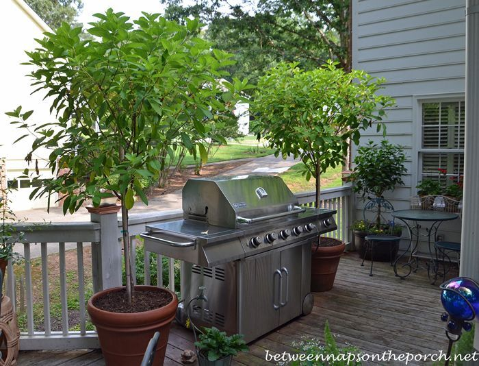Plant Tree Form Plants In Heavy Pots That Can Withstand Strong Winds. A  Heavy