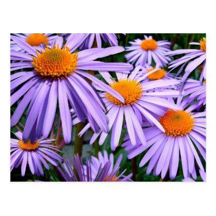 Aster Flowers Petals Blossoms Purple Orange Postcard Zazzle Com Aster Flower Types Of Flowers Summer Flowers