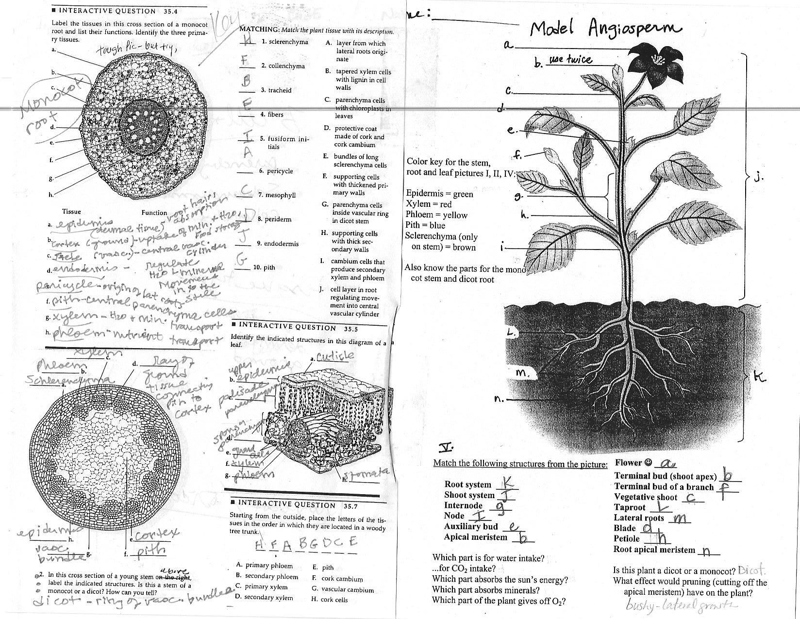 Plant Anatomy Carbon Dioxide Is Absorbed Through Pores In