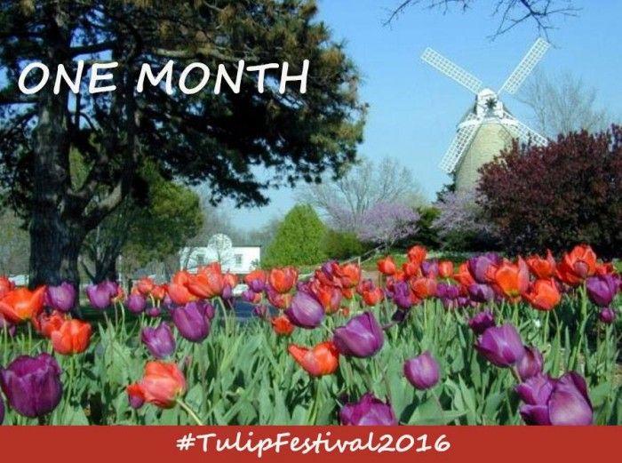 10. Tulip Festival (Wamego)