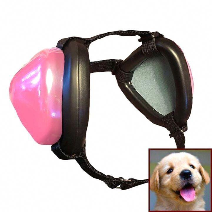 Puppygram Dogscorner Goldenretriever Pup Barkbox Puppylife