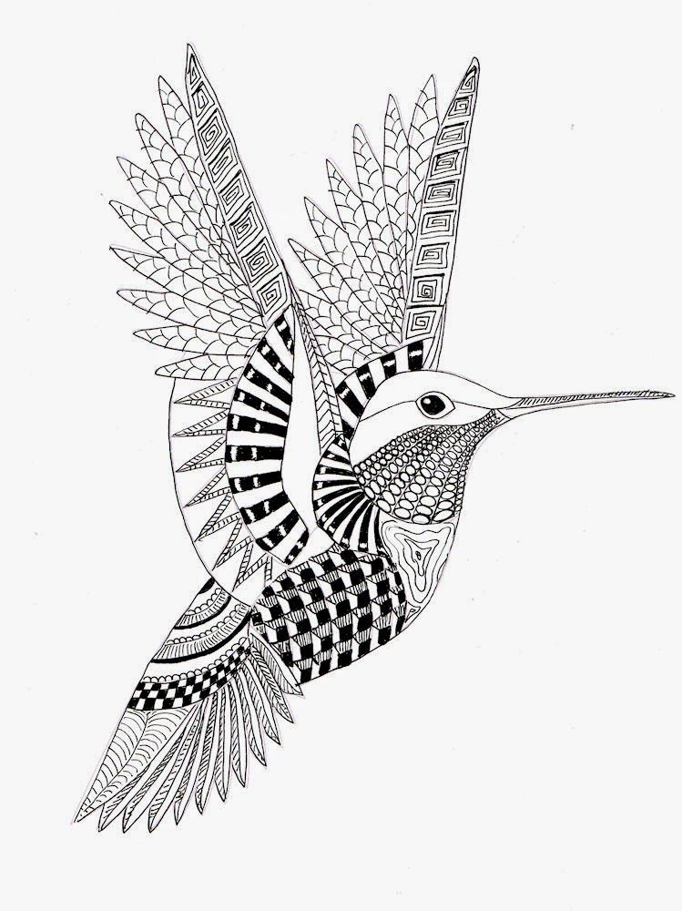Efie goes Zentangle hummingbird Coloring Pages Pinterest