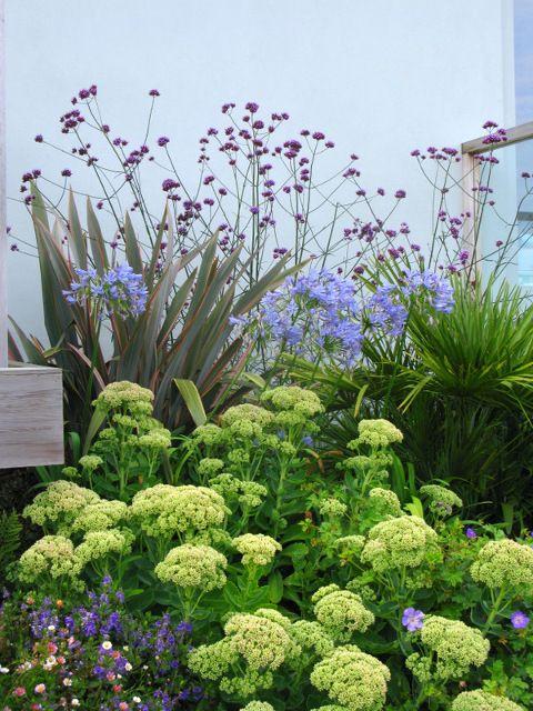 Phormium Sedums In 2020 Garden Design Cornwall Garden Garden Planning