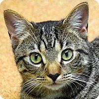 Adopt A Pet Rasputin Norwalk Ct Animal Shelter Volunteer Cat Adoption Animals