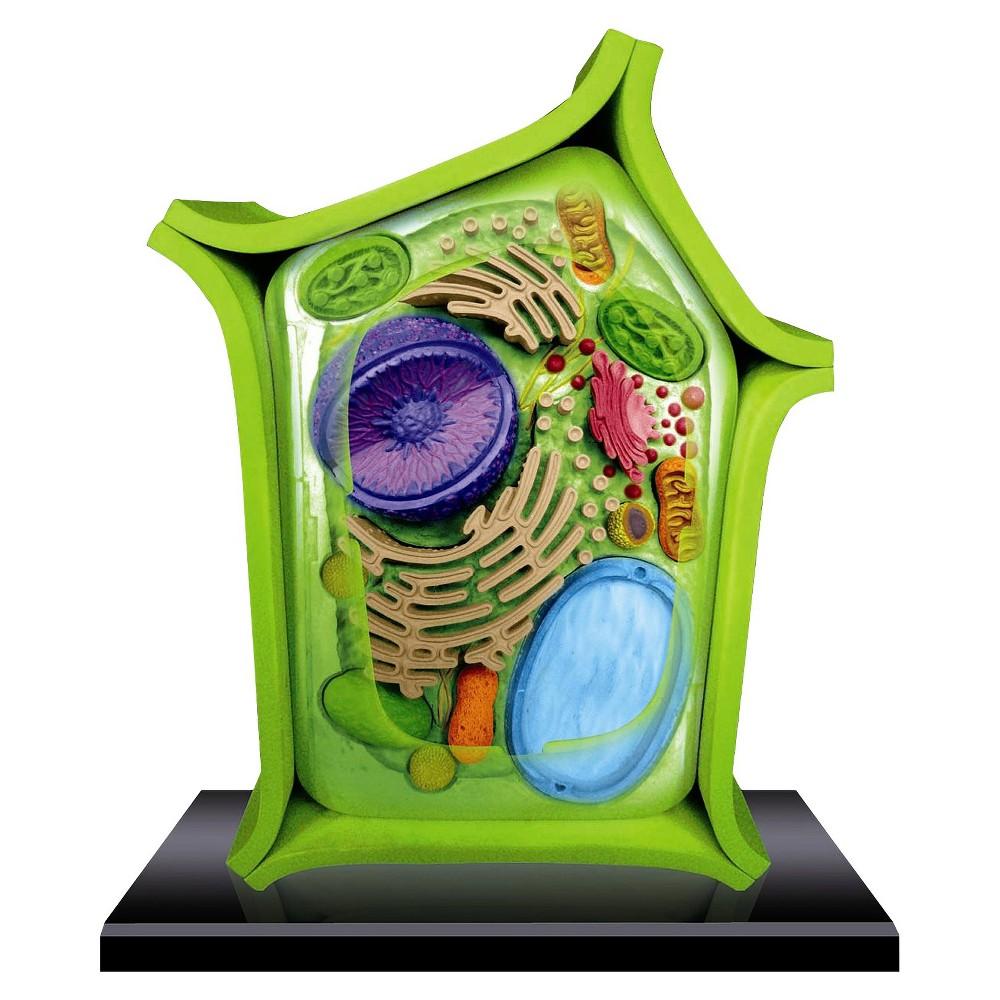 hight resolution of john n hansen 4d science plant cell anatomy model