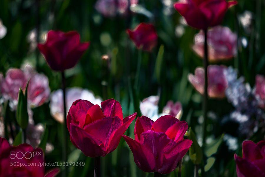 Psychadelic tulips by Ordkraft