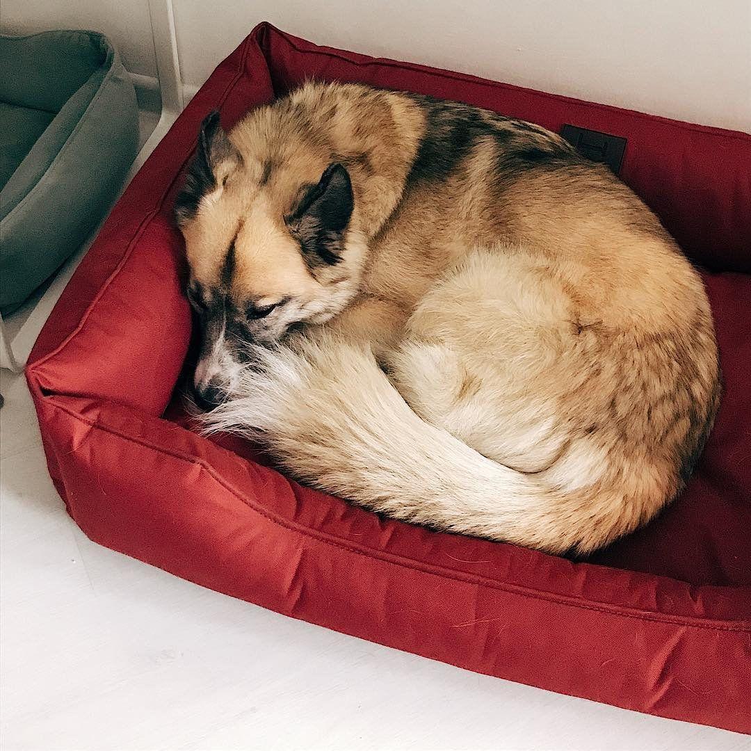 Waterproof Dog bed Dreamer RED / Outdoor dog mattress