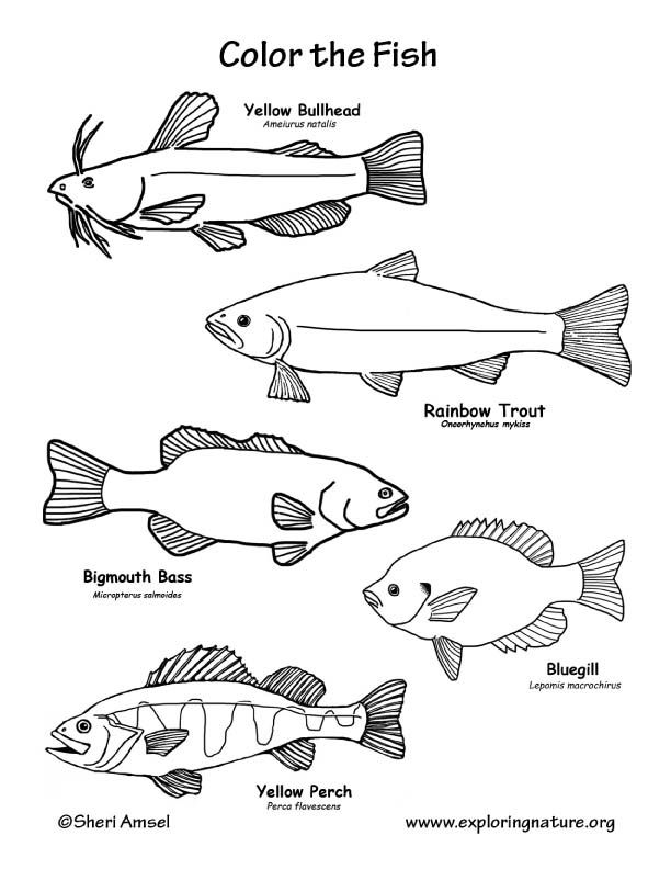 Coloring Pages Fishing Colouring Printable Books Sheets Peach