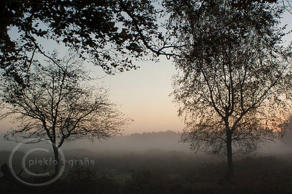 #naturephotography  Early morning fall scene #digitalsunrise scene by piekfotografie, €18.98