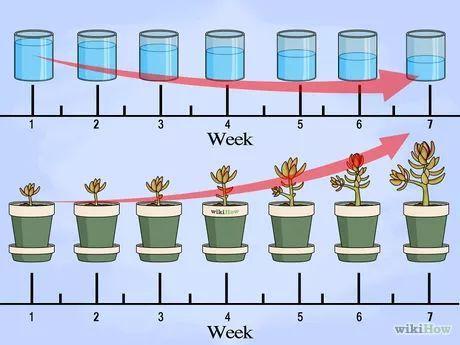Stecklinge Von Sukkulenten Vermehren Garten