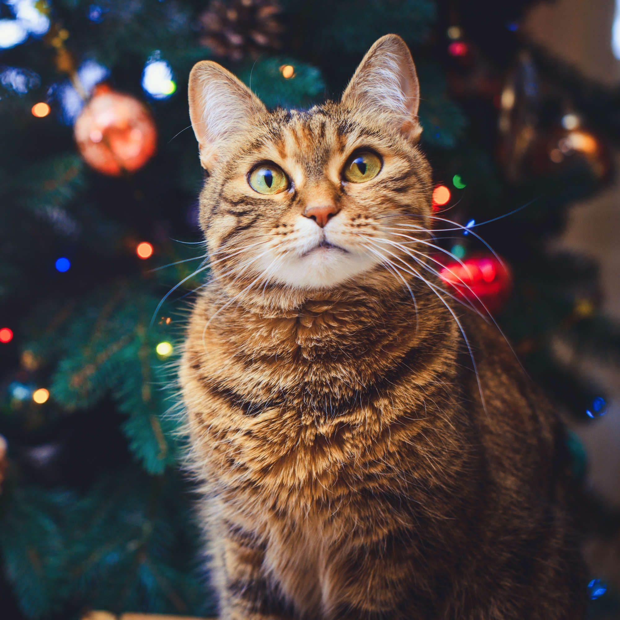 Calling All Cat Moms Trader Joe's Is Making an Advent
