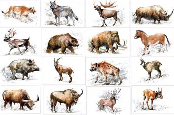 image animaux prehistoire