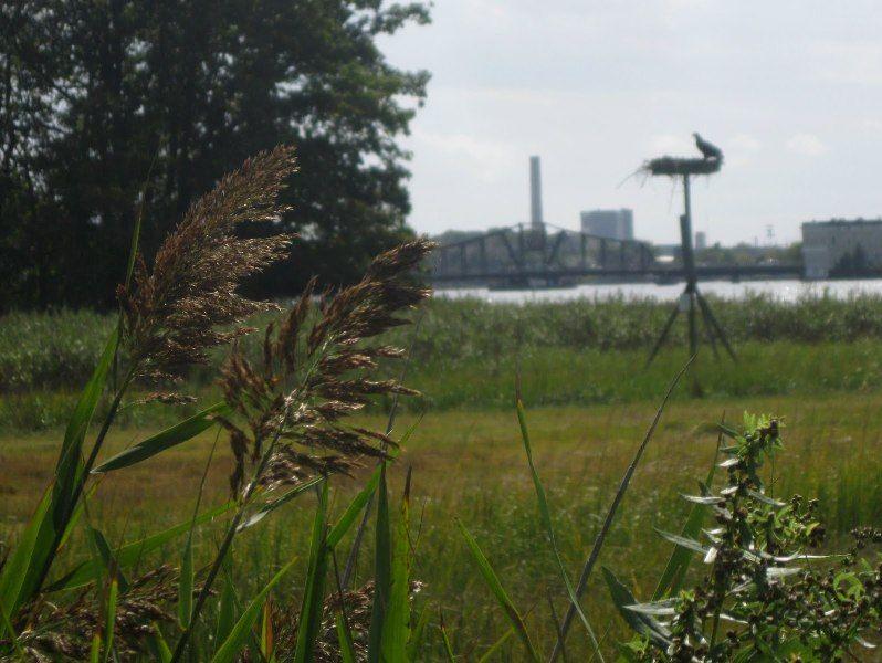 Quinnipiac River Tidal Marsh Trail River Places To Go Tidal