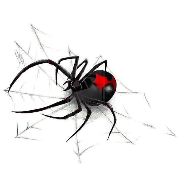 Почтовых открыток, рисунок с пауками