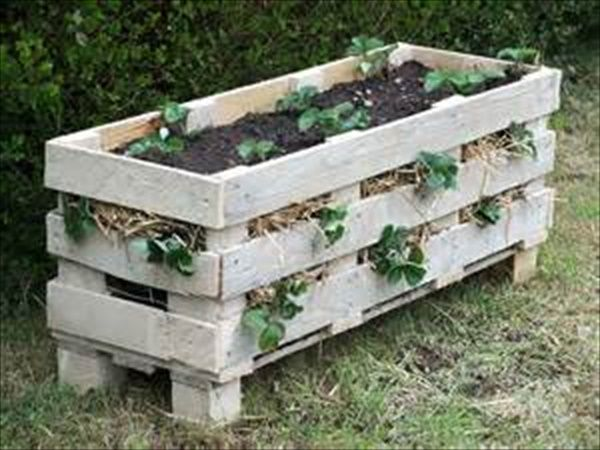 Awesome Planters for home Gardening   EASY DIY and CRAFTS
