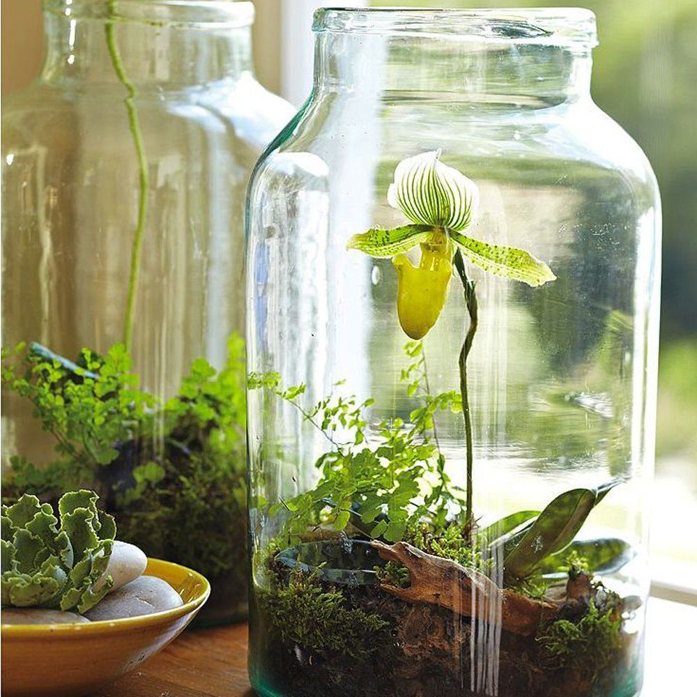 diy faire soi m me son terrarium 100 id es d co jardin pinterest. Black Bedroom Furniture Sets. Home Design Ideas