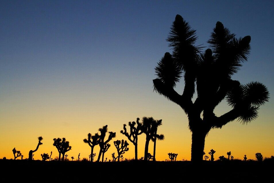 Pin by Dixie Leavitt on Mother Nature Joshua tree