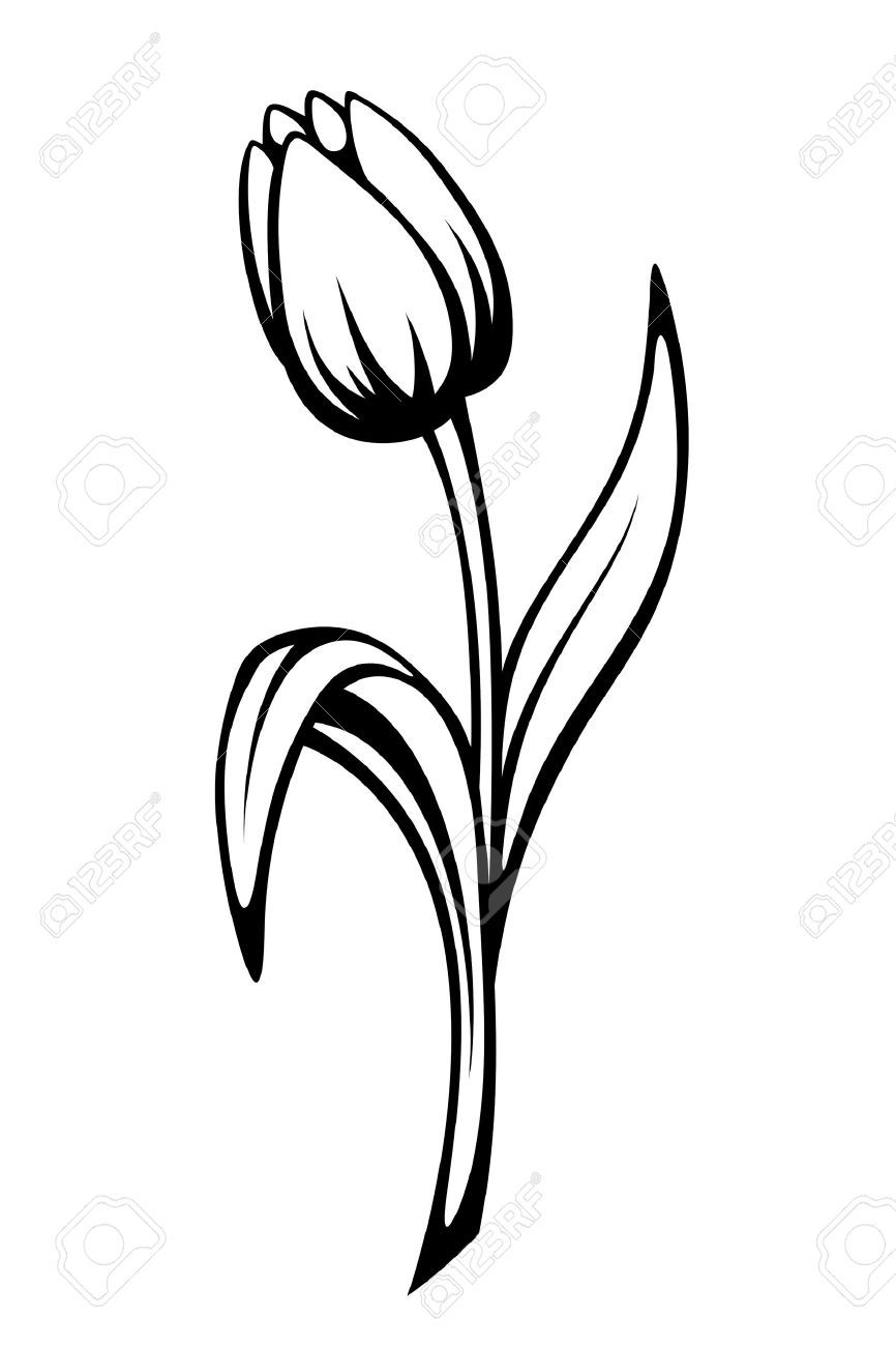 Vector Black Contour Of A Tulip Flower Isolated On A White Background Stock Vector 50558667 Flower Drawing Flower Line Drawings Tulip Drawing
