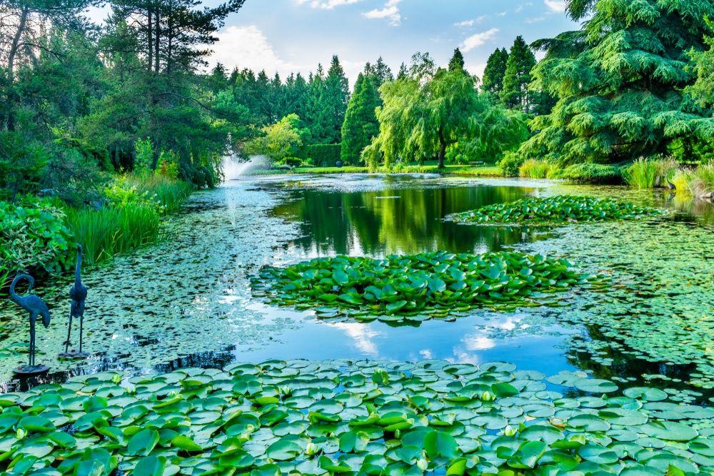 174eaf6b6ec2345af6ac9c483a6f5bb5 - Places To Eat Near Van Dusen Gardens