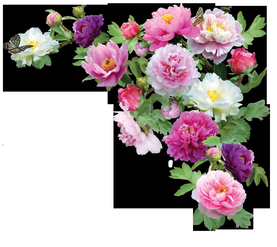 Peoniespng By Kmygraphic On Deviantart Flower Prints Framed Flowers Flower Photos