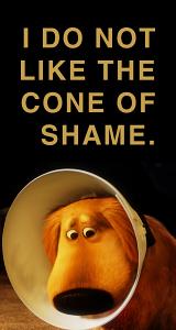 Cone of Shame... So cute!