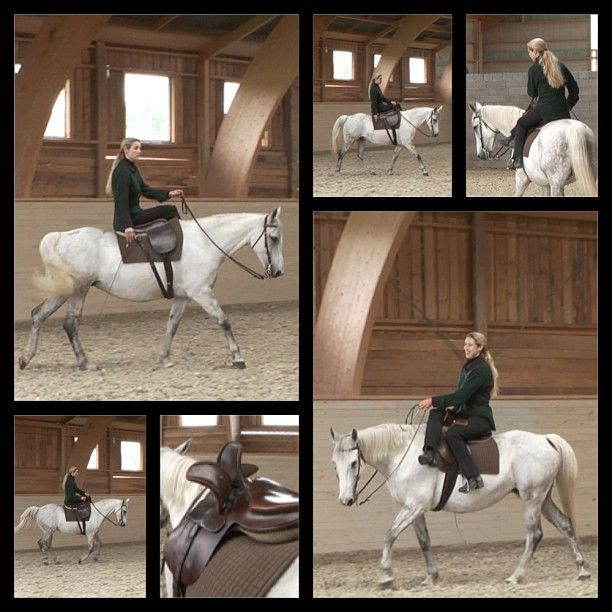 """Highly educated older horses are called """"Professors"""". These very experienced school horses have a lot of education to pass on to the rider and can teach a rider for example to ride in a side saddle.    On the picture you see the wonderful """"Professor"""" Patrovinia, a Russian mare and former horse of Hanna Engström."""