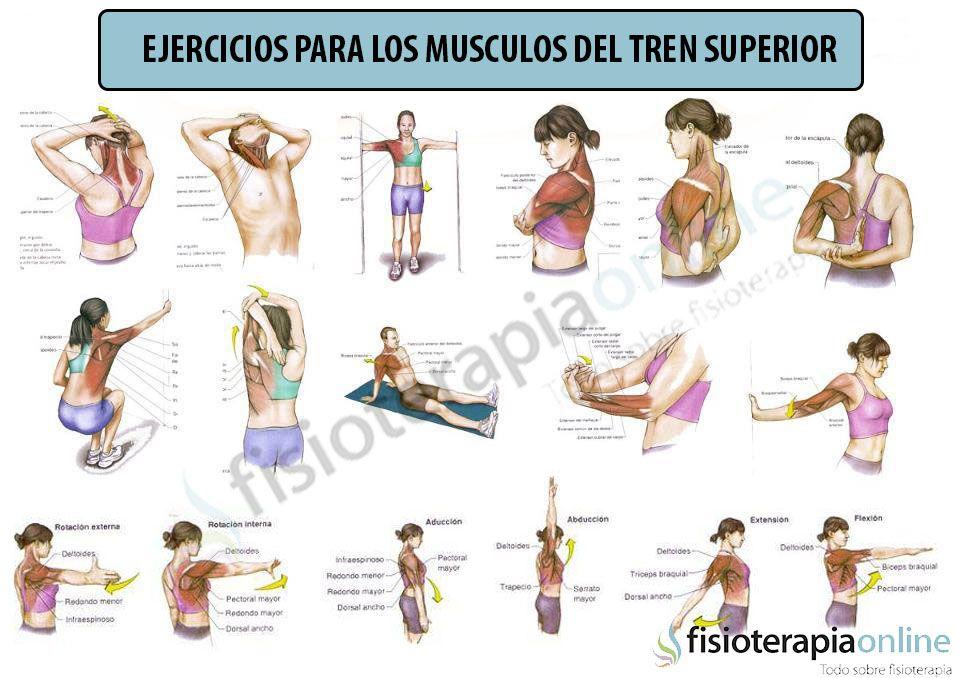 Http Www Fisioterapia Online Com Videos Estiramiento De Los Musculos Pectorales Bic Estiramientos Ejercicios De Fisioterapia Ejercicios Para Dolor De Espalda